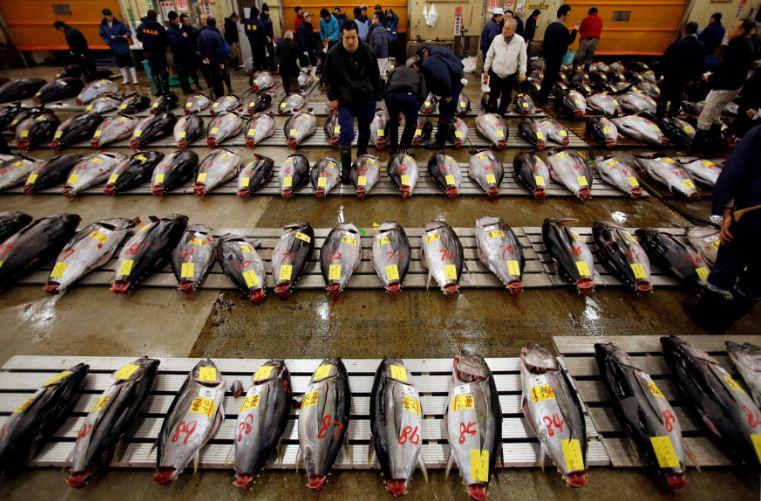 tsukiji fish market wholesales