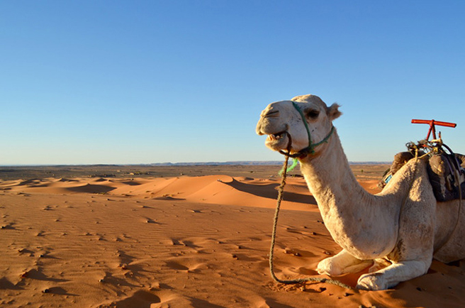 Camp in the desert morocco guides tips