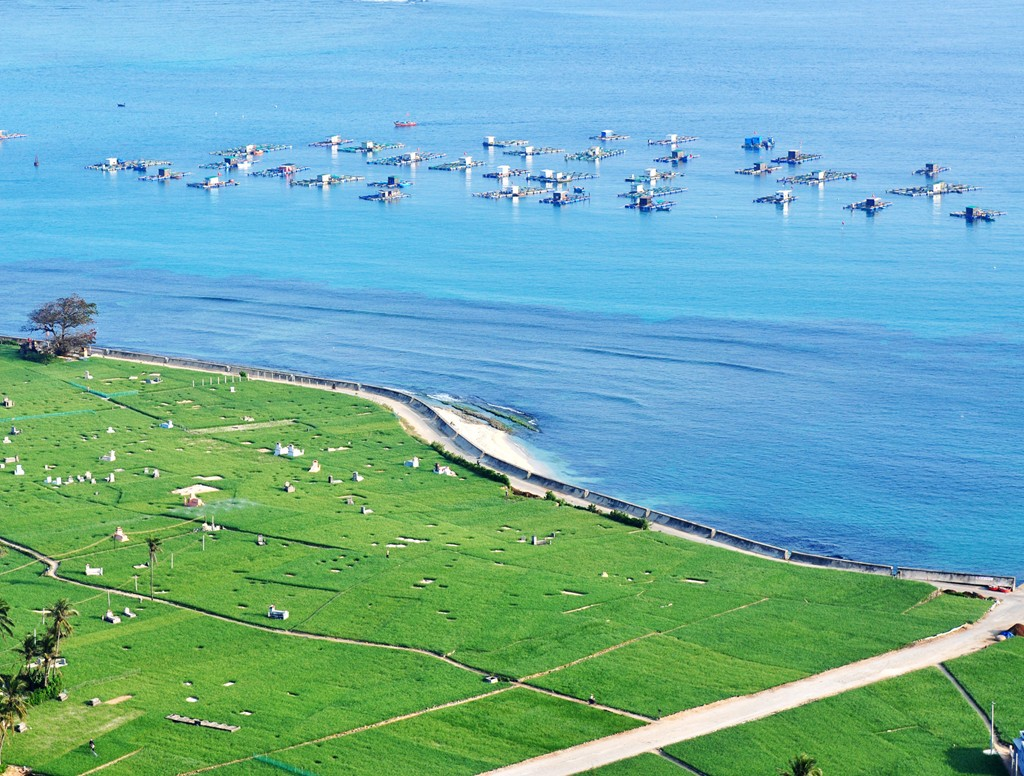 The garlic fields near aquaculture cages of fishermen have become the highlight on the island.