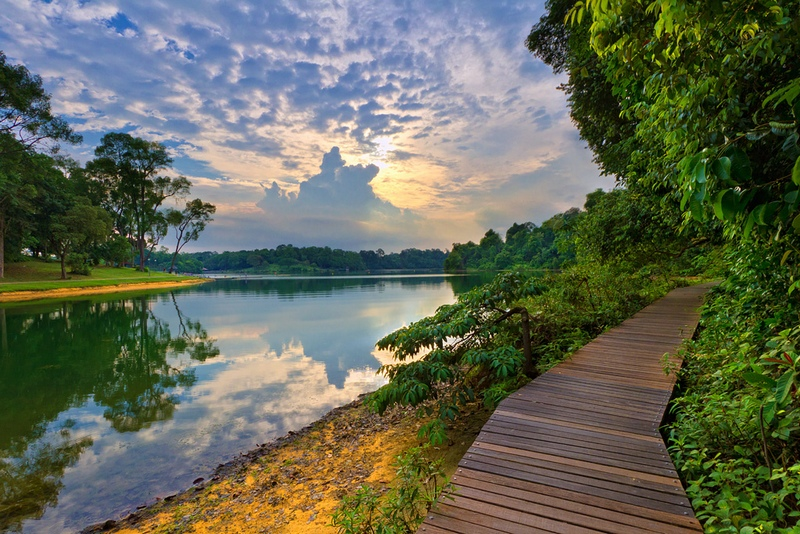 MacRitchie Park. Photo by Spintheday