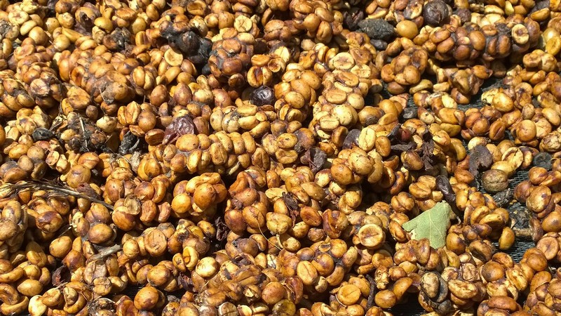 MeLinhCoffeeGarden-Dalat-A tray of weasel coffee