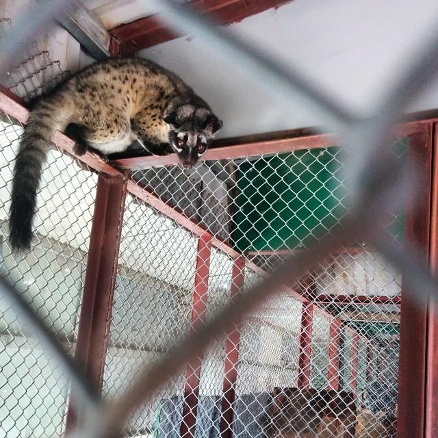 MeLinhCoffeeGarden-Dalat-visit weasel
