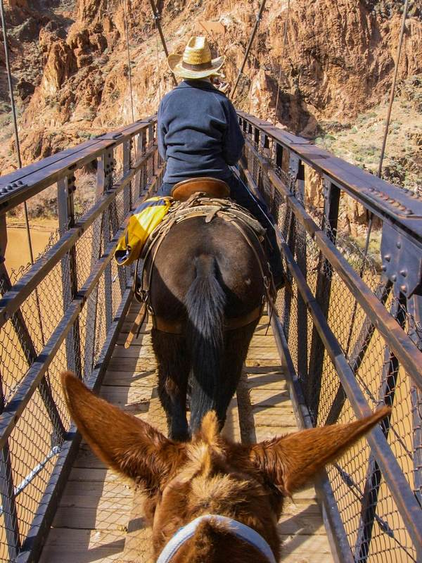 Mule rides are an effective way to see the Canyon © melpilgrim / Budget Travel
