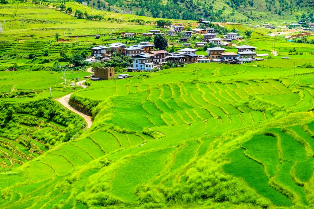 Organic farms bhutan04
