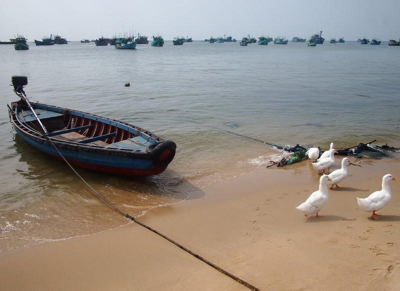 Phu Quoc Island Beach ducks