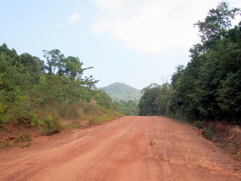 Phu Quoc Island Forest Road