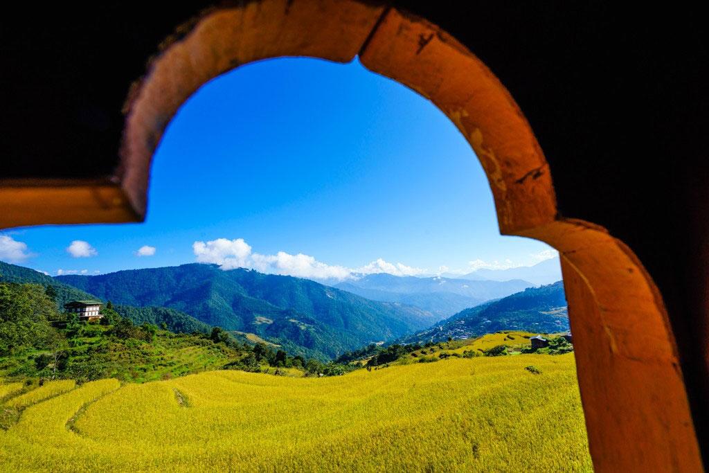 Punakha Valley grain season.