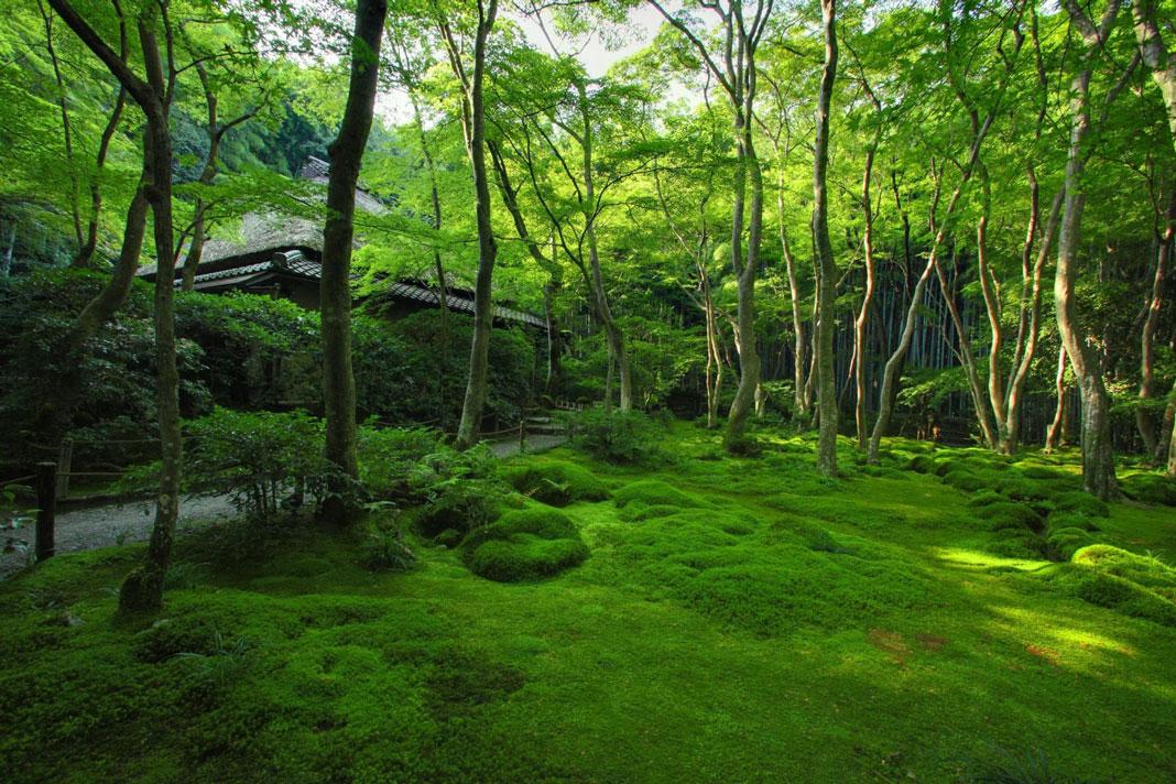Saiho-ji-1068