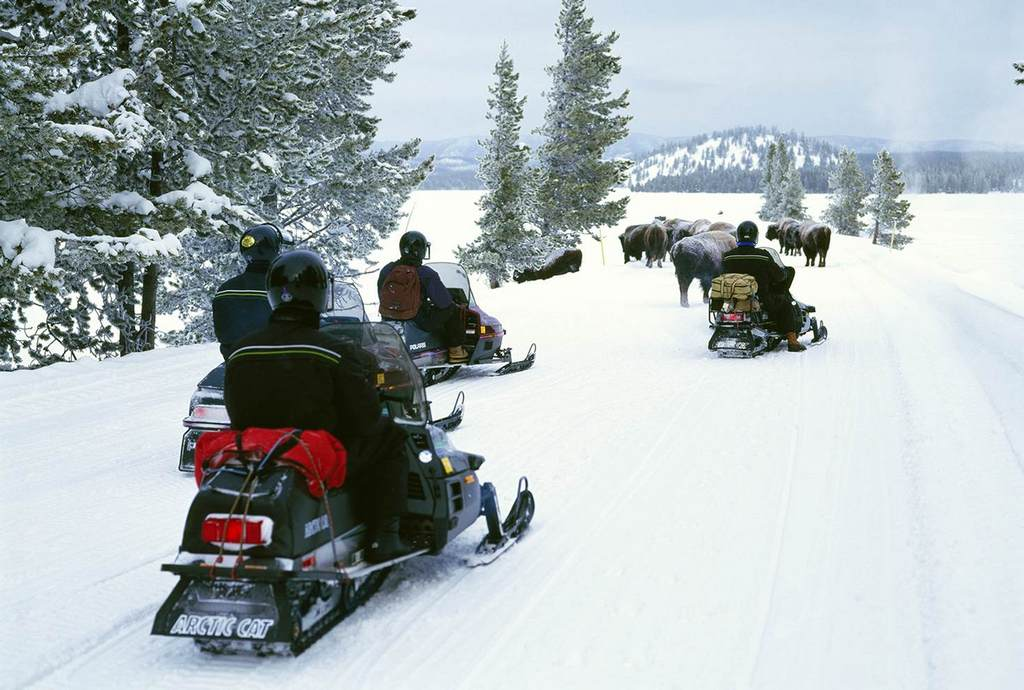 Winter magic: steer a snowmobile among bison herds during the cold months in Yellowstone National Park © Jeff Foott / Getty Images.