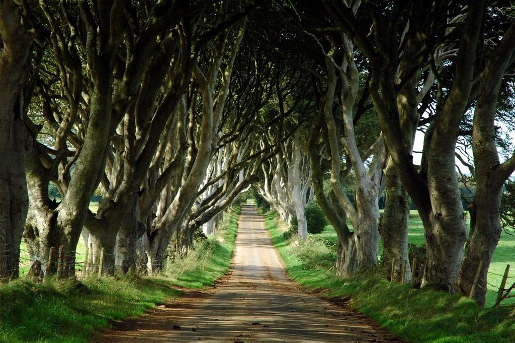 The Dark Hedges–Northern Ireland