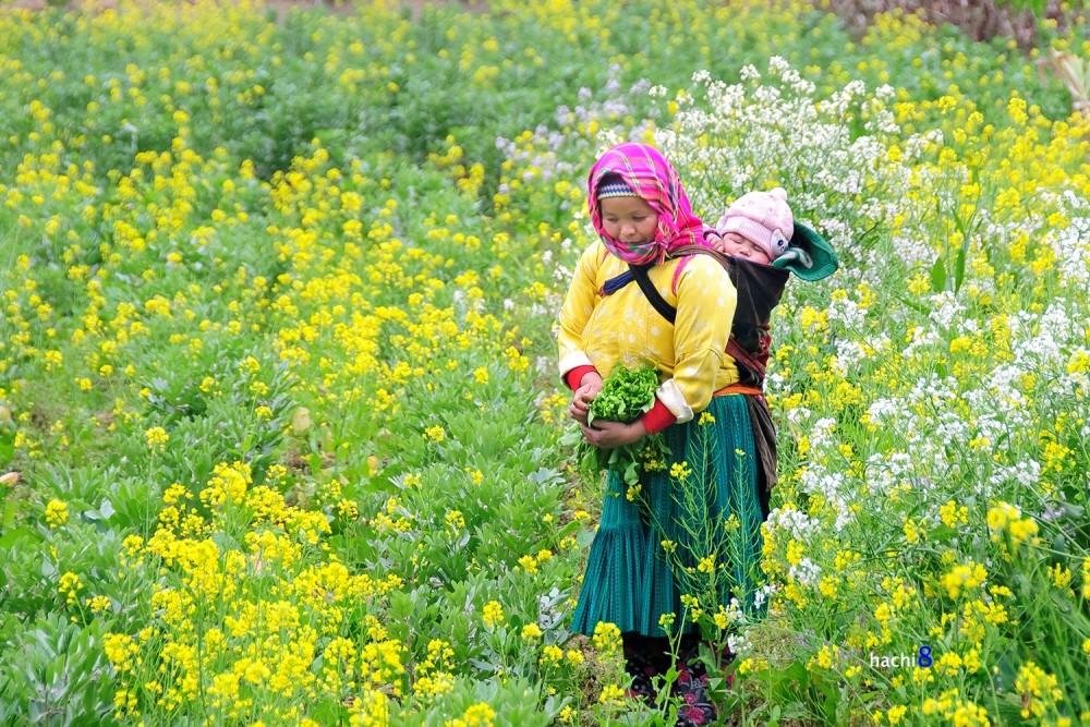 baby sleep Ha Giang bloom season northwest Vietnam8