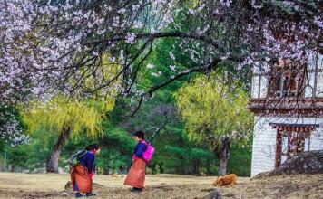 Spring in Bhutan