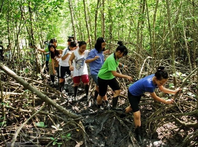 Exploring Vam Sat mangrove forest