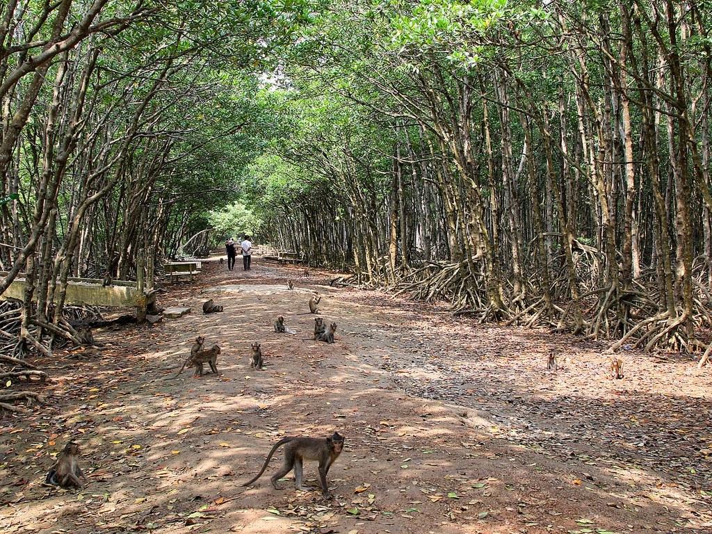 """Monkey Island – """"Kingdom"""" of monkeys"""