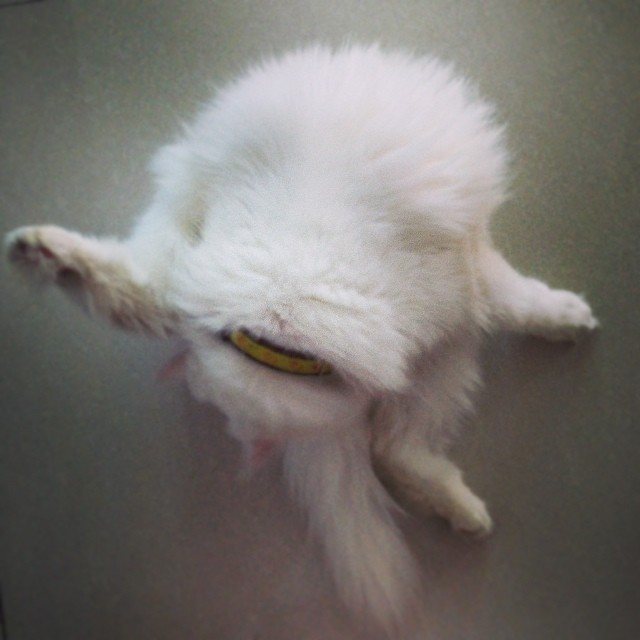Downward-facing cat.