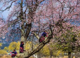 children-spring-bhutan-travel-guide-tourist-attractions-bhutan-travel-photos-pictures