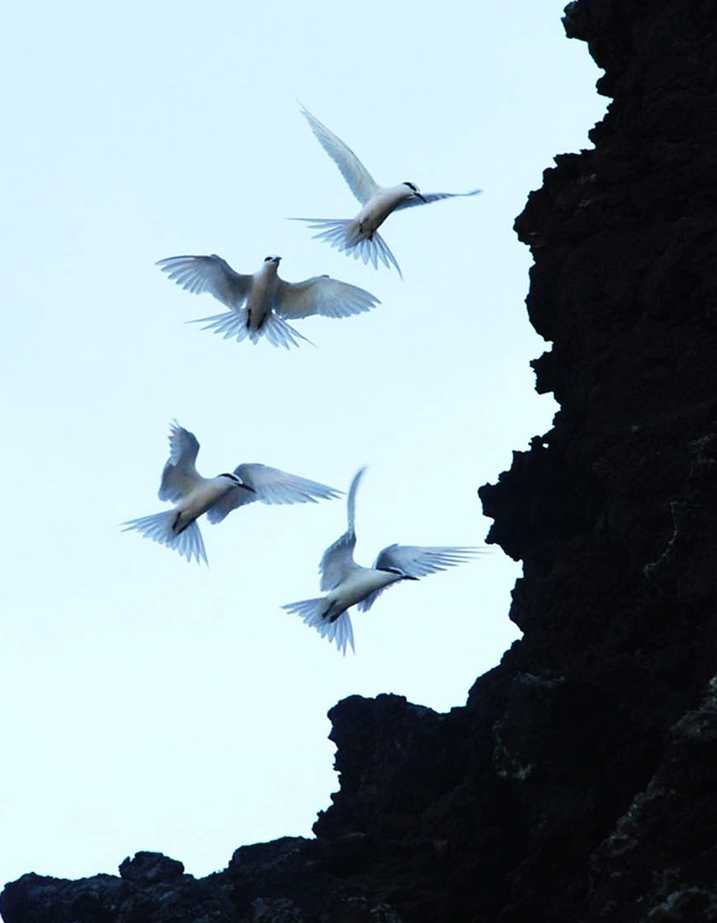 Seagulls are flying to their nests altogether.