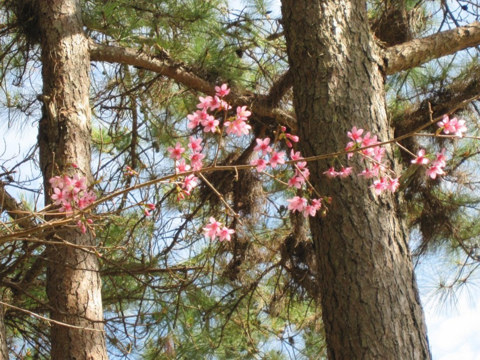 muoi-loi-valley-flowers-dalat-lam-dong-vietnam-2