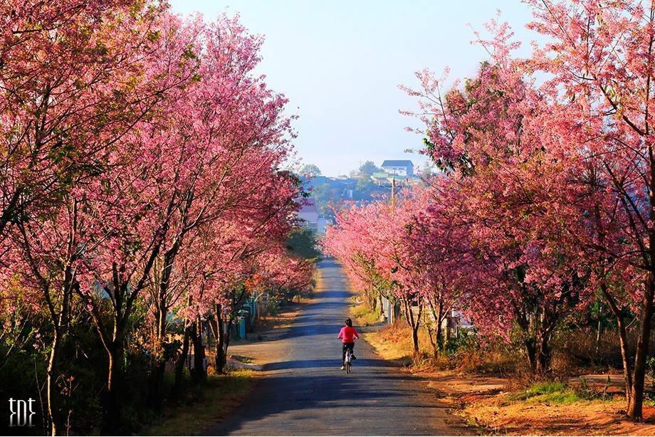 muoi-loi-valley-flowers-dalat-lam-dong-vietnam-33