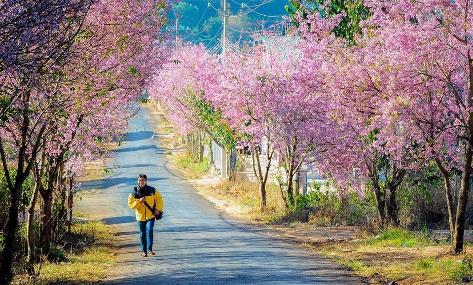 muoi-loi-valley-flowers-dalat-lam-dong-vietnam-e