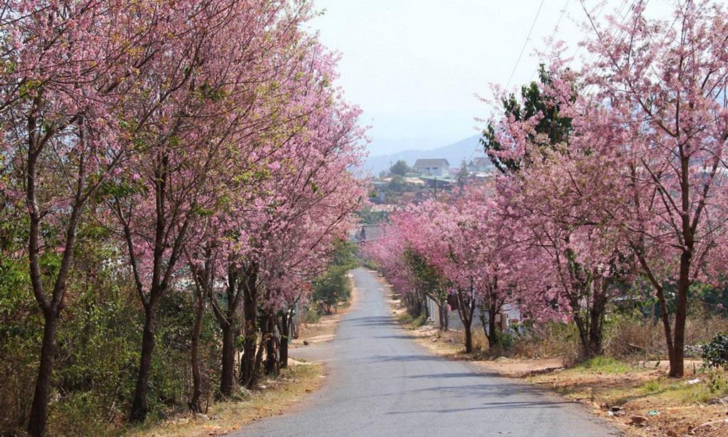 muoi-loi-valley-flowers-dalat-lam-dong-vietnam