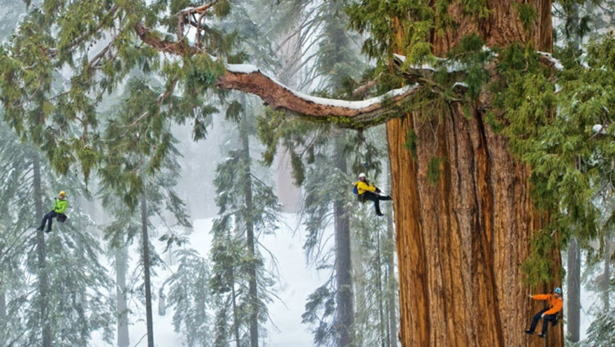 president Sequoia tree located in the Giant Forest of Sequoia National Park (2)