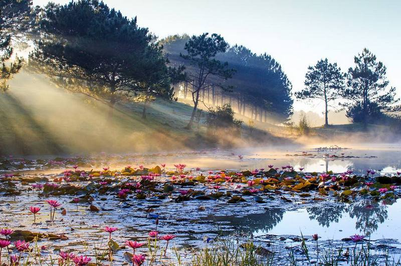 spring-feeling-on-color-of-water-lily-in-dalat