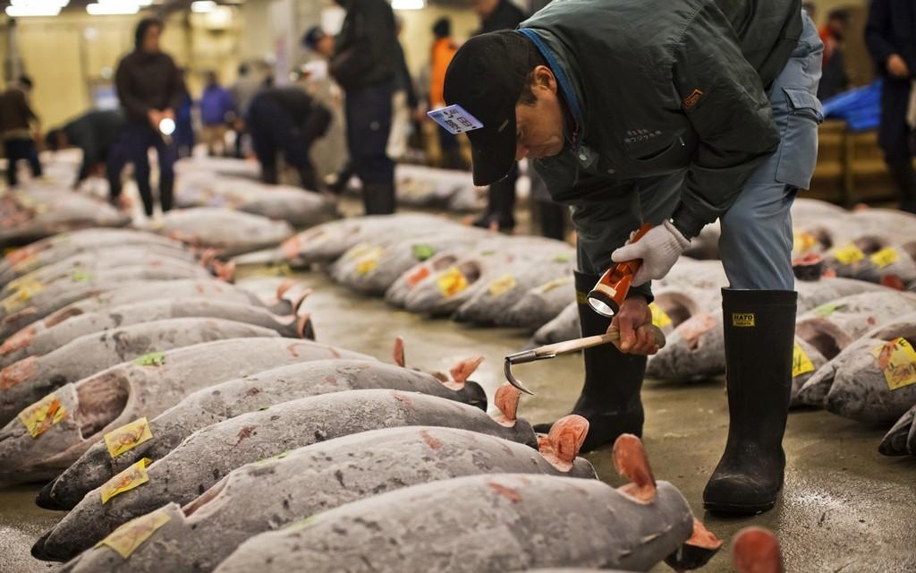 Visiting tsukiji fish market the largest fish market in for Japan fish market