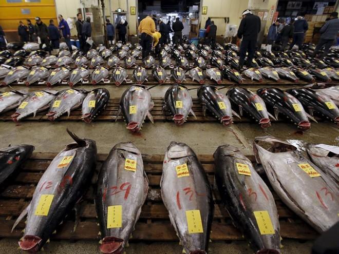 tsukiji-fish-market-tokyo-japan-2