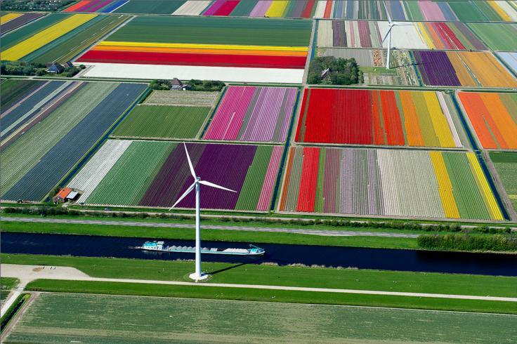 1.An Aerial Tour of Tulip Fields in the Netherlands
