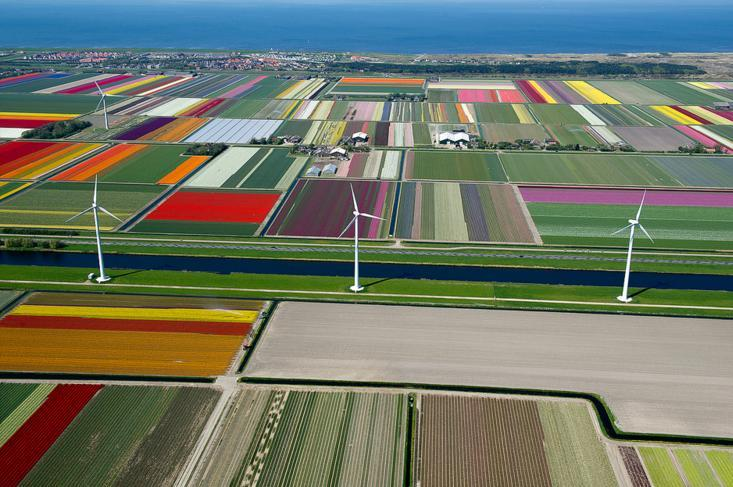 10.An Aerial Tour of Tulip Fields in the Netherlands