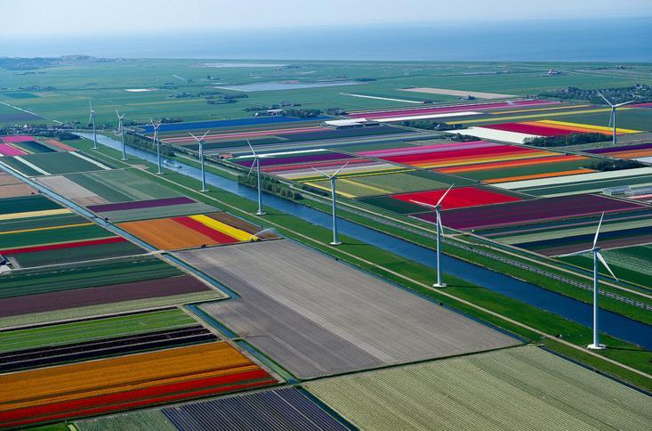 2.An Aerial Tour of Tulip Fields in the Netherlands