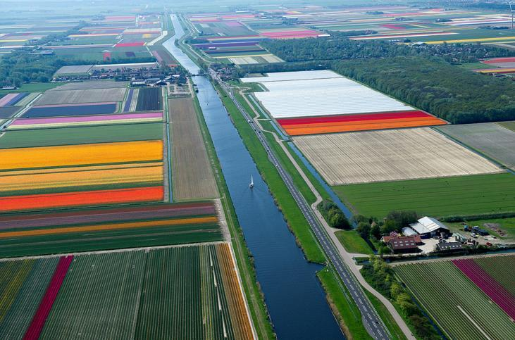 3.An Aerial Tour of Tulip Fields in the Netherlands