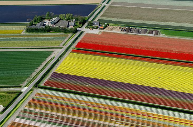 4.An Aerial Tour of Tulip Fields in the Netherlands