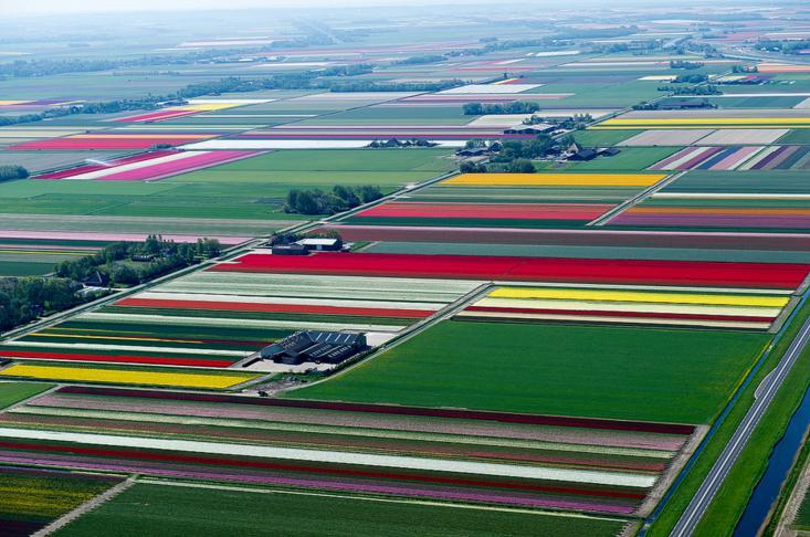 5.An Aerial Tour of Tulip Fields in the Netherlands