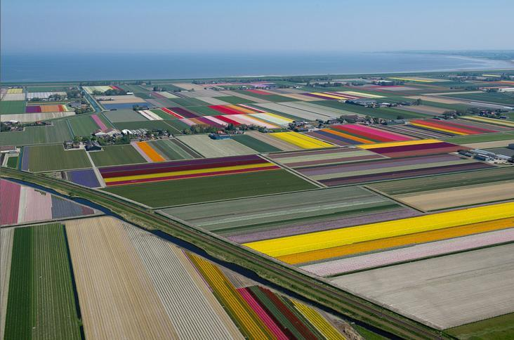 6.An Aerial Tour of Tulip Fields in the Netherlands