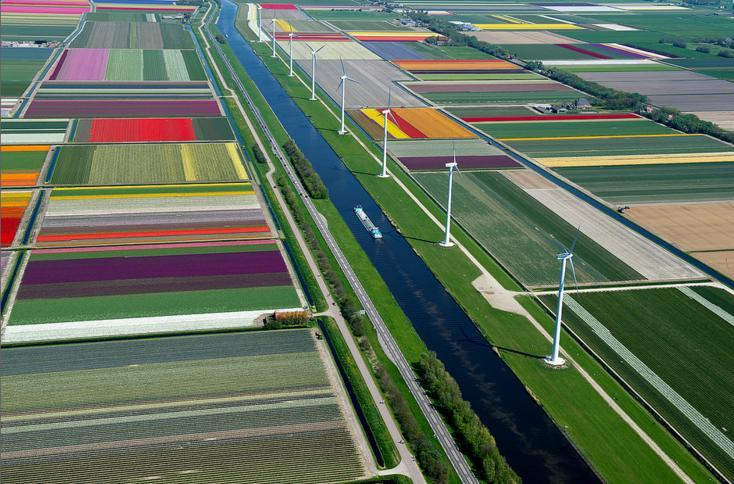 7.An Aerial Tour of Tulip Fields in the Netherlands