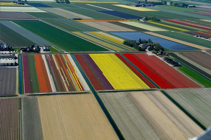 8.An Aerial Tour of Tulip Fields in the Netherlands