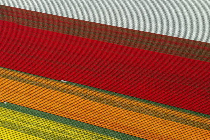 9.An Aerial Tour of Tulip Fields in the Netherlands