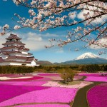 12 magical photos of cherry blossoms in Japan