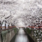 10+ magical photos of cherry blossoms in Japan