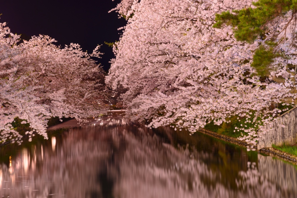 Cherry blossoms in Japan 9