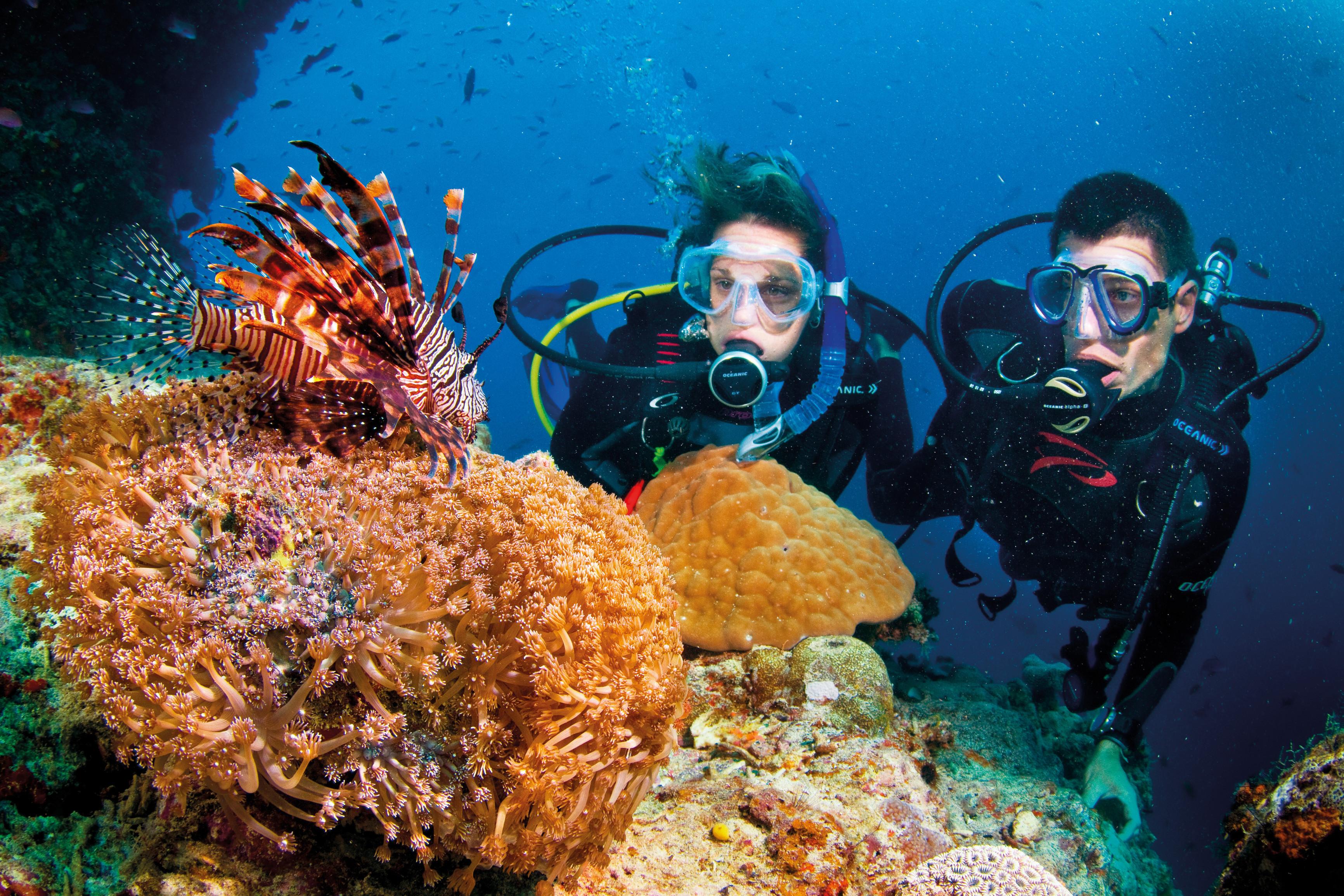 Coral reef Cu Lao Cham_source: vietmate.com.vn