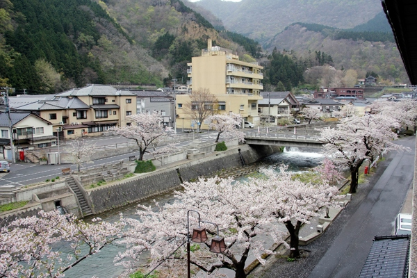 Glorious cherry blossoms along the stream yamagata japan