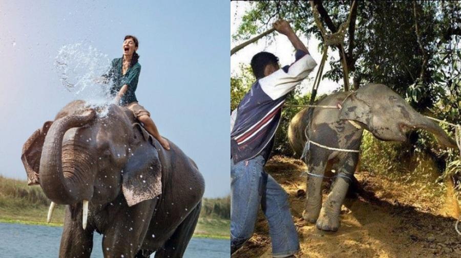Elephant-riding experience