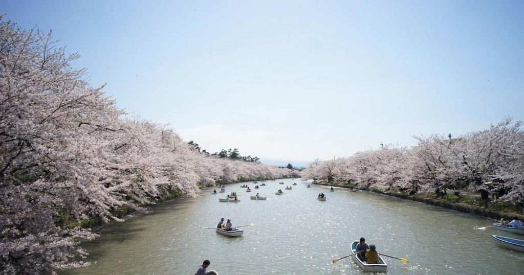 Tourists on their boat admiring the cherry blossom season Image credits: Ryan WH