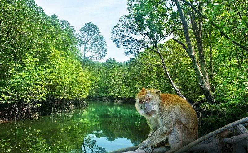 Langkawi wild animal