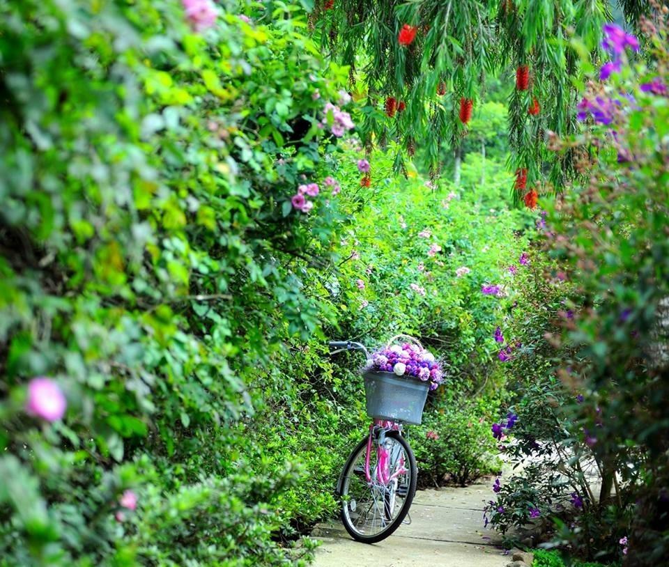 Romantic atmosphere in Ma Rung Lu Quan. Photo: facebook Ma Rung Lu Quan