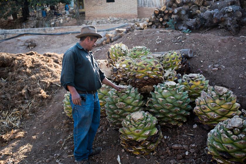 Mezcal farmer, Alberto Martinez,