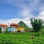 Visit Moc Chau – Sleep in a bungalow container and behold the lush green tea fields